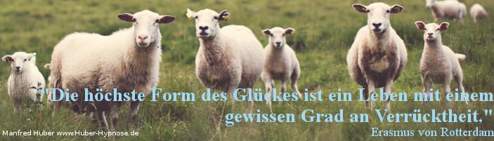 Glückszitat Nr. 08 - Glückszitat Nr. 08 - Die höchste Form des Glückes ist ein Leben mit einem gewissen Grad an Verrücktheit. - Erasmus von Rotterdam