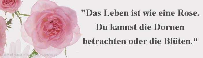 Glückszitat Nr. 19 - Das Leben ist wie eine Rose. Du kannst die Dornen betrachten oder die Blüten.